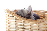 The cat looks out of a beige wattled basket. — Stock Photo