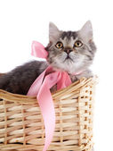 Cat with a pink bow in a wattled basket. — Stock Photo