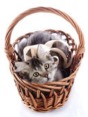 Cat with yellow eyes and a tape in a wattled basket. — Stock Photo