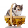 Kitten in a basket. — Stock Photo