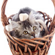 Striped cat with a tape in a wattled basket. — Stock Photo