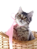 Cat with yellow eyes and a pink tape in a wattled basket. — Stock Photo