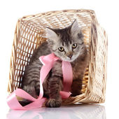 The cat with a pink bow sits in a wattled basket. — Stock Photo
