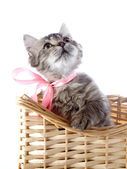 Cat with yellow eyes and a pink bow in a wattled basket. — Stock Photo