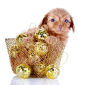 Puppy in a wattled basket with New Year's balls. — Stock Photo