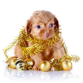 Puppy with New Year's balls and tinsel. — Stock Photo