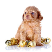 Puppy with New Year's balls. — Stock Photo