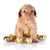 Puppy with New Year's balls. — Stok fotoğraf