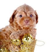 štěně wattled koše s novoroční míčky. — Stock fotografie