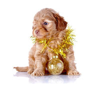 Puppy with New Year's ball and tinsel. — Stock Photo