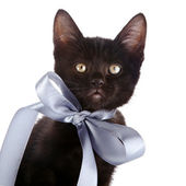 Portrait of a black kitten with a gray bow. — Stock Photo