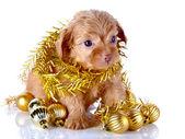 新年的球和金属丝的小狗. — 图库照片