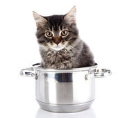 Fluffy cat with brown eyes in a pan. — Foto de Stock