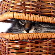 Cat in wattled basket — Stock Photo #35220557