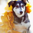 Dog in yellow autumn leaves. — Stock Photo