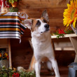 Dog with a mountain ash in the rural house. — Stock Photo