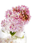 Lilac bouquet in a glass. — Stock Photo