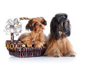 Decorative doggies with a basket and a bow. — Stock Photo