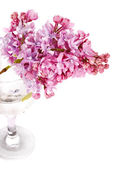 Lilac branch in a glass on a white background. — Stock Photo