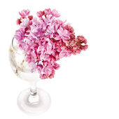 Lilac bouquet in a glass. — Stockfoto