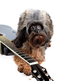 Decorative shaggy doggie and black guitar. — Stock Photo