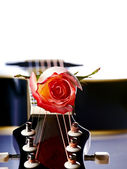 Guitar and rose. — Stock Photo