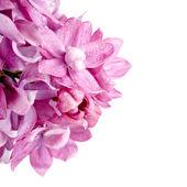 Květy. — Stock fotografie