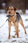 Doggie on walk. — Stock Photo