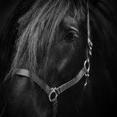 Mynningen på en häst. — Stockfoto