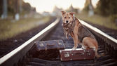The red dog sits on a suitcase on rails — Stock Photo