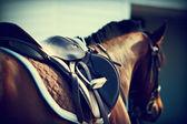 Saddle with stirrups — Stock Photo
