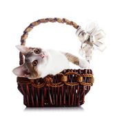 Kitten in a wattled basket with a bow. — Stock Photo