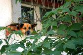 Hunden sitter i fängelse — Stockfoto
