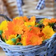 Plucked marigold flowers lie in a basket — Stock Photo