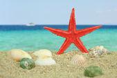 Red Starfish on beach — Stock Photo