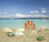 морские раковины на пляже — Стоковое фото