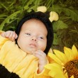 Portrait of baby dressed as bee — Stock Photo