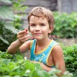Beautiful little boy collects berries in the garden — Stock Photo