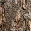 Wooden texture — Stock Photo #6009960