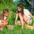 Harvests of berries and mushrooms - lovely girls — Stock Photo