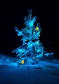 Leuchtende lichter von einem natürlichen weihnachten — Stockfoto
