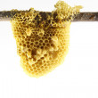 Stock Photo: Honeycomb with tree isolate on white