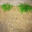 Square growing green grass on dry grass and concrete side way te — Stock Photo