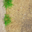 Vertical growing green grass on dry grass and concrete side way — Stock Photo