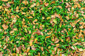 Autumn leaves on green grass background — Foto Stock