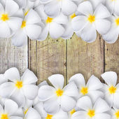 Frangipani flower  on wood floor — Stock Photo
