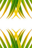 Leaves of palm tree isolated, design for background — Stock Photo