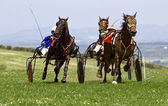 Trotting Race Wales — Stock Photo