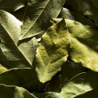 Bay leaf - Foto de Stock
