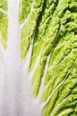 Lettuce leaf — Stock Photo